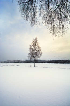 Lone tree in a snow covered landscape Stock Photo