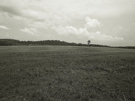 vast: Vast grassland