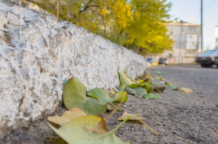 Reinforced curb line on the asphalt road and nearby lying leaves. Banco de Imagens