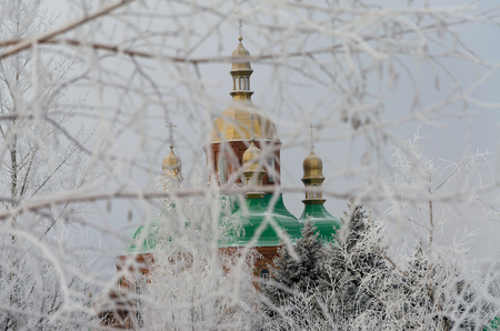 Golden domes of the church behind the branches of trees in winter.