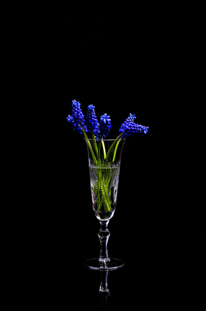 Blue bouquet of wild flowers in a glass on an isolated black background. Stock Photo