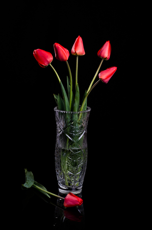 Bouquet of red tulips in a large vase on a black background.