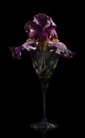 Irises in a glass Venetian goblet on a black background with hard light.