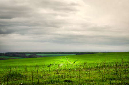 Green grass field landscape with nice background