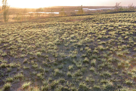Background field grass at sunset. 版權商用圖片