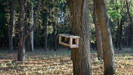 Autumn landscape - a bird feeder in the form of a house hanging on a tree against a background of yellow autumn foliage
