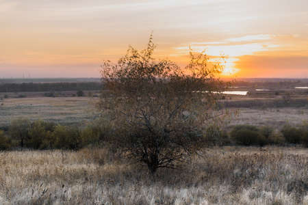 Steppe landscapes with grass and trees.