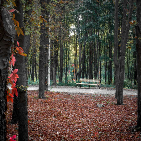 Bench in the autumn park at sunset among the trees. 版權商用圖片