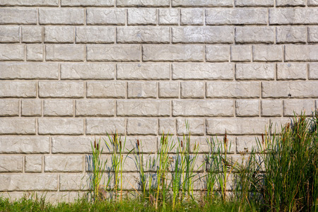 stock photography: Cat Tails in front of brick patterned retaining wall Stock Photo