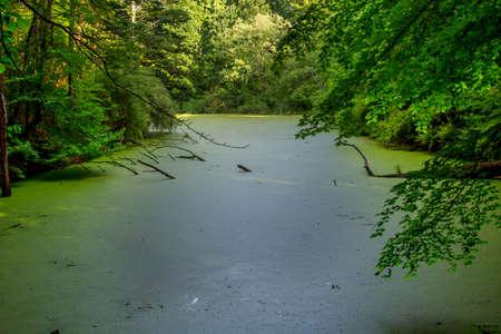 녹색 오리 잡초로 덮인 우드랜드 연못