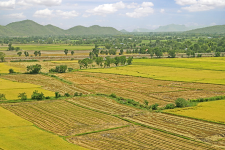 seson: Rice paddies in Thailand Before the harvest of rice Thailand  Green - yellow  shade of  rice paddies  southeast Asia  Stock Photo
