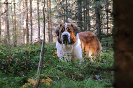 dog walking in the forest photo