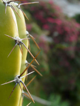 prickles: Cactus with prickles