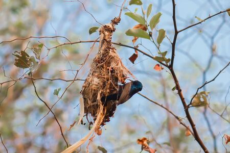 Mother birds find food to feed their children With love and concern