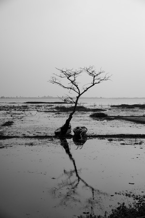 toter baum: Dead tree and boat with sunset,black and white style Lizenzfreie Bilder