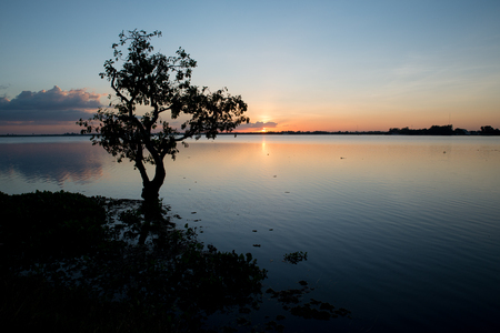 Lonely tree in lake at Sunset