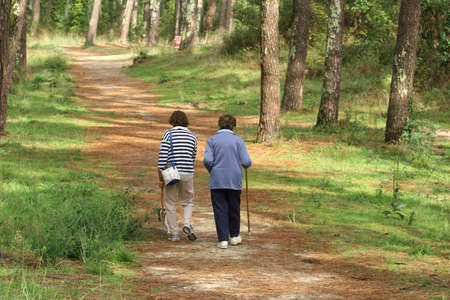 senioren wandelen: aantal senioren lopen in een bos