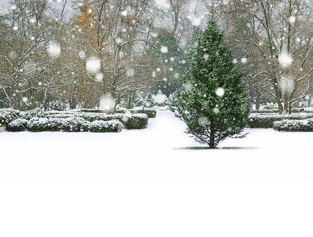 冬の背景、雪のある風景 写真素材