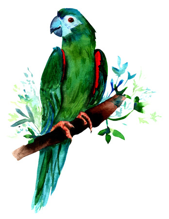 A watercolor drawing of a green colored parrot, sitting on a blurred tree branch, hand painted on white background, vintage style, isolated Stock Photo