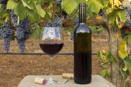 Glass and bottle of wine in vineyard at harvest Stock Photo