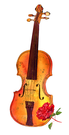 Watercolour and ink violin and rose drawing, isolated on white