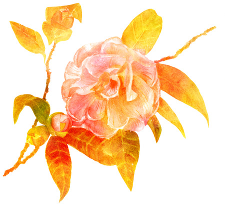 Vintage style hand drawn watercolor camellia branch, golden tone Stock Photo