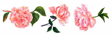 Set of vintage style pink watercolor flowers on white