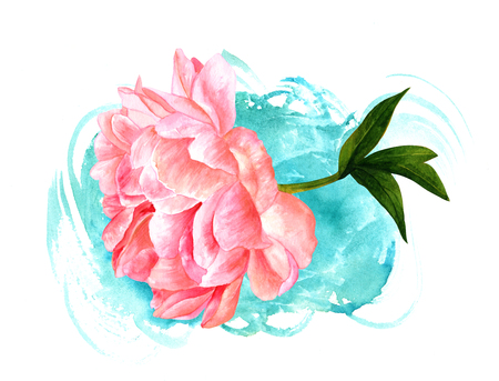 Watercolor drawing of pink peony flower with teal texture