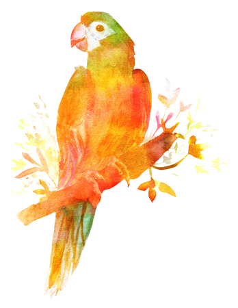 macaw: Watercolor drawing of a parrot, golden toned, isolated