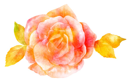 fragrances: Watercolor rose drawing, isolated on white, golden toned