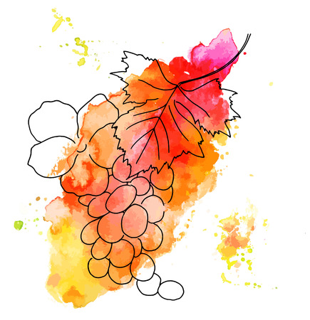 Vector and watercolor grape vine with rose on white