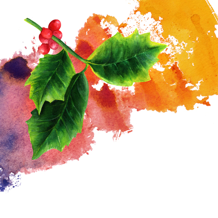 watercolor drawing of christmas holly with place for text stock