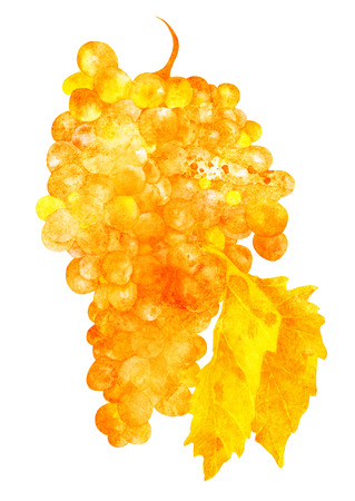 Golden toned watercolor wine grapes with leaf, isolated Stock Photo