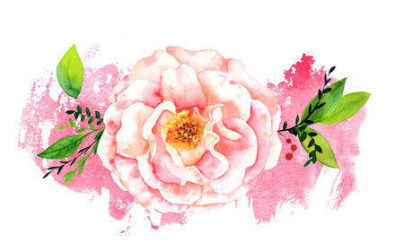 brushstroke: Watercolor rose on pink brush stroke with copyspace Stock Photo