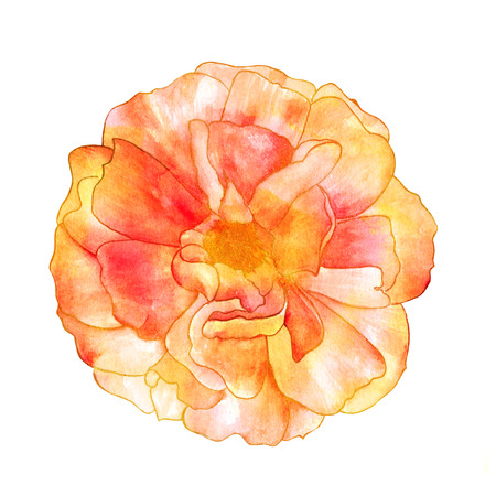 Isolated watercolor rose on a white background, golden toned Stock Photo