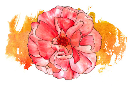 Watercolor rose with a golden yellow brushstroke on a white background Stock Photo