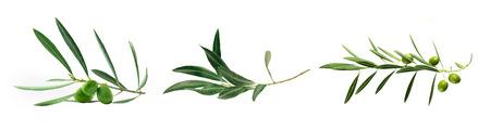 Satz von grünen Olivenzweig isoliert auf weiß