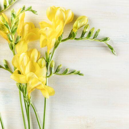 Spring design template with yellow freesia flowers and copyspace, square photo
