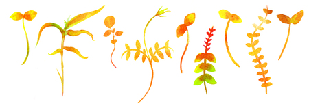 A set of little yellow grasses and plants, watercolor elements for an autumn design