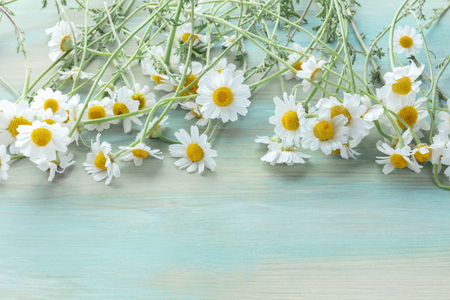 A bouquet of blooming chamomile flowers on a teal blue wooden background with a place for text