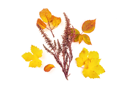 A bouquet of vibrant orange and yellow autumn leaves, shot from the top on a white background with a place for text