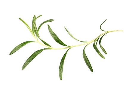 An elegant rosemary branch, isolated on a white background with a clipping path Фото со стока