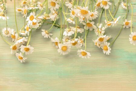 Many chamomile flowers on a teal background with a place for text, toned image Фото со стока