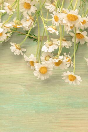 A bouquet of daisies on a teal background with a place for text, toned image