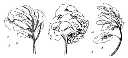 A set of vector pen and ink drawings of autumn trees with falling leaves on a white background, autumnal design elements