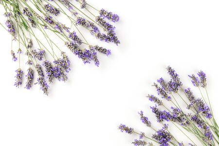 A frame of blooming lavender flowers, shot from the top on a white background with a place for text