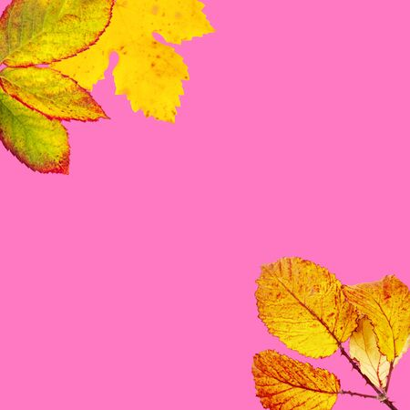 Autumn design template with autumn leaves on a pink background