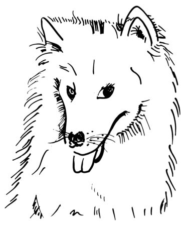 A vector pen and ink drawing of a smililng samoyed dog 向量圖像