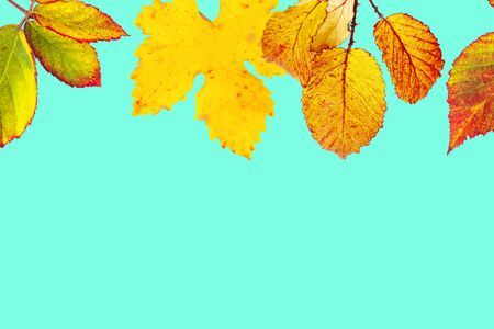 Autumn design template with vibrant yellow and orange autumn leaves on a teal blue background with copy space