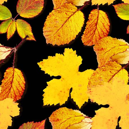 A seamless autumn leaves pattern on a black background, a fall repeat print
